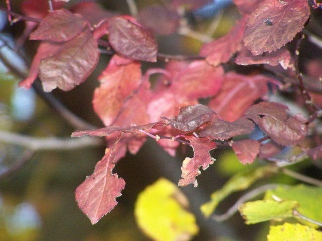 Autumn foliage in close up.