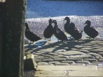 Ducks enjoying the sunshine