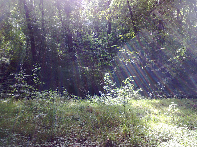Sunlight through the trees into a clearing