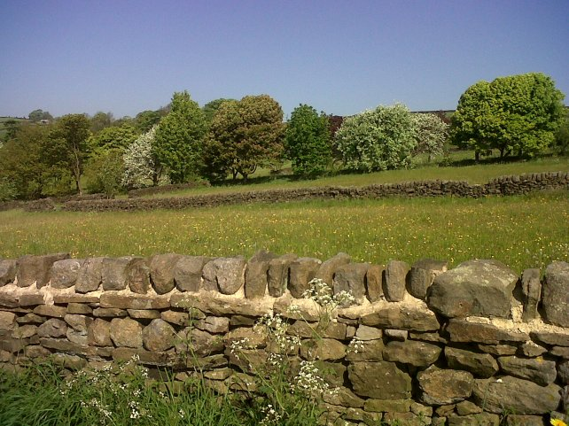 Yorkshire is also know for it's dry stone walling.  This is taken in the summer.
