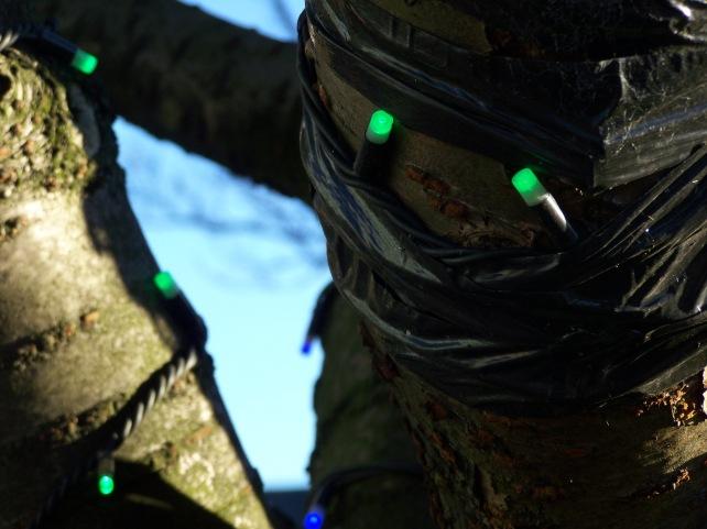 Christmas Lights around a tree