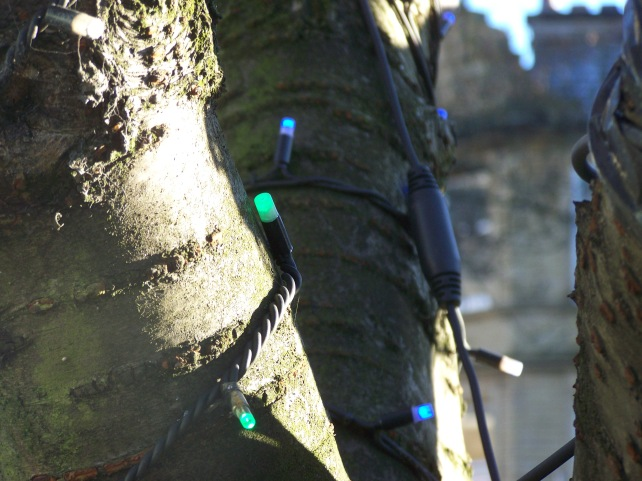 Christmas lights around the bark of a tree