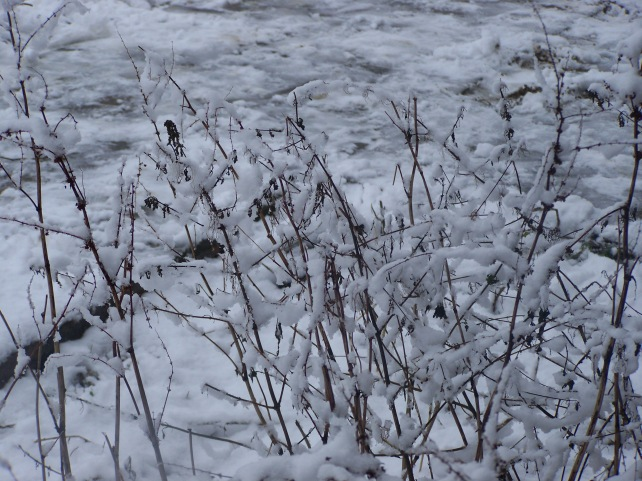With a dusting of snow even the weeds look good.
