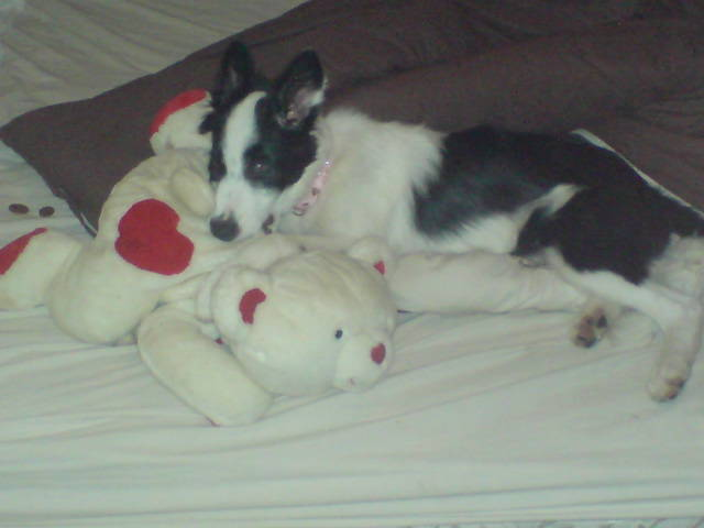 Miss Bailey eating one of my teddy's